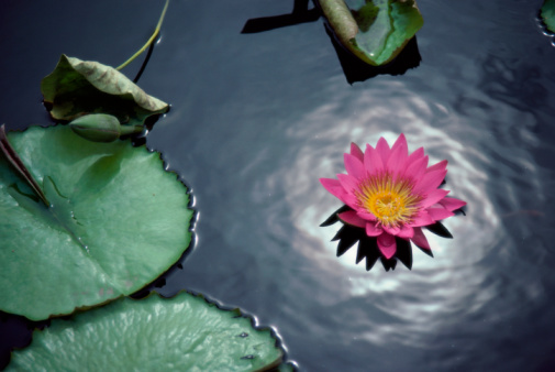 The Jewel is at the Heart of the Lotus